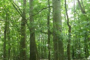 296 Acres - Timber, Foodplots, Hunting and Recreation  in Adair, KY (29 of 65)