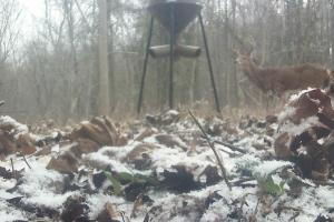 296 Acres - Timber, Foodplots, Hunting and Recreation  in Adair, KY (44 of 65)