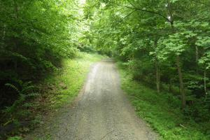 296 Acres - Timber, Foodplots, Hunting and Recreation  in Adair, KY (5 of 65)