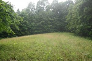 296 Acres - Timber, Foodplots, Hunting and Recreation  in Adair, KY (23 of 65)