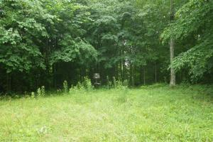 296 Acres - Timber, Foodplots, Hunting and Recreation  in Adair, KY (24 of 65)