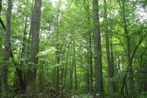 296 Acres - Timber, Foodplots, Hunting and Recreation  in Adair, KY (27 of 65)