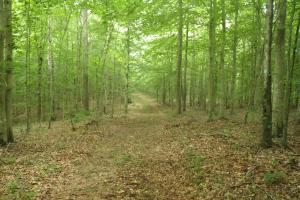296 Acres - Timber, Foodplots, Hunting and Recreation  in Adair, KY (14 of 65)