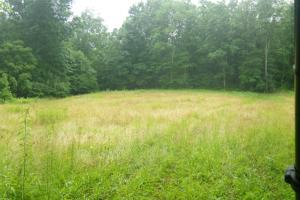 296 Acres - Timber, Foodplots, Hunting and Recreation  in Adair, KY (26 of 65)