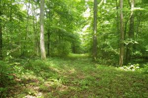 296 Acres - Timber, Foodplots, Hunting and Recreation  in Adair, KY (31 of 65)