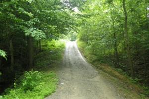 296 Acres - Timber, Foodplots, Hunting and Recreation  in Adair, KY (6 of 65)