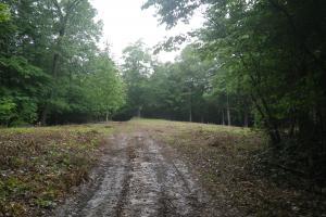 296 Acres - Timber, Foodplots, Hunting and Recreation  in Adair, KY (7 of 65)