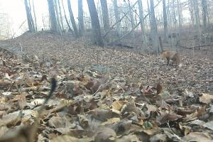 296 Acres - Timber, Foodplots, Hunting and Recreation  in Adair, KY (57 of 65)