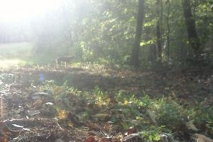 296 Acres - Timber, Foodplots, Hunting and Recreation  in Adair, KY (45 of 65)