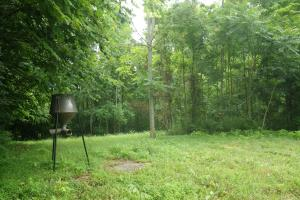 296 Acres - Timber, Foodplots, Hunting and Recreation  in Adair, KY (33 of 65)