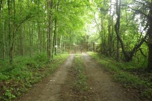 296 Acres - Timber, Foodplots, Hunting and Recreation  in Adair, KY (4 of 65)