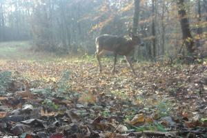 296 Acres - Timber, Foodplots, Hunting and Recreation  in Adair, KY (51 of 65)