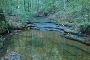 296 Acres - Timber, Foodplots, Hunting and Recreation  in Adair, KY (2 of 65)