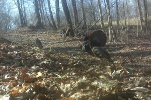 296 Acres - Timber, Foodplots, Hunting and Recreation  in Adair, KY (59 of 65)