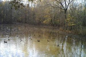 80 Acres Flooded Green Duck Hunting Timber