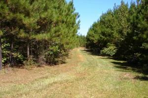 Sapps Road Hunting and Timber Investment - Pickens County AL