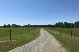 Heffner Cattle Farm in Laurens, SC (11 of 96)