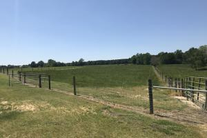 Heffner Cattle Farm in Laurens, SC (44 of 96)