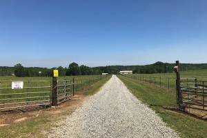 Heffner Cattle Farm in Laurens, SC (83 of 96)