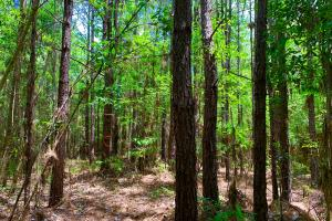 Bates Creek Hunting and Recreational Tract in Washington, AL (2 of 8)