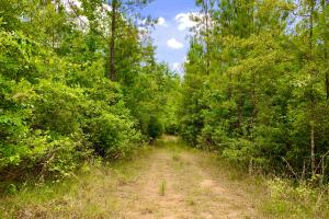 Bates Creek Hunting and Recreational Tract in Washington, AL (5 of 8)