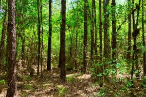 Bates Creek Hunting and Recreational Tract in Washington, AL (3 of 8)