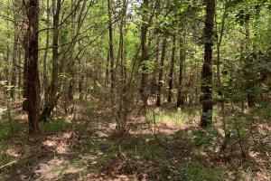 Bates Creek Hunting and Recreational Tract in Washington, AL (7 of 8)