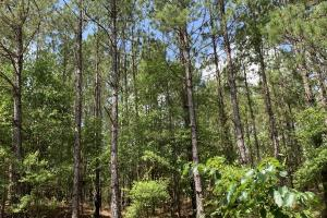 Big Branch Hunting and Timber Investment Tract in Washington, AL (8 of 12)