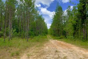 Big Branch Hunting and Timber Investment Tract in Washington, AL (12 of 12)