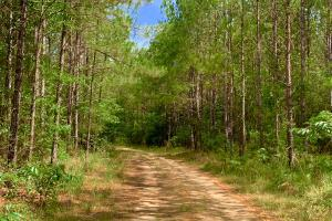 Big Branch Hunting and Timber Investment Tract in Washington, AL (3 of 12)