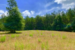 Big Branch Hunting and Timber Investment Tract in Washington, AL (2 of 12)