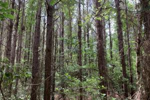 Big Branch Hunting and Timber Investment Tract in Washington, AL (11 of 12)