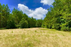 Big Branch Hunting and Timber Investment Tract in Washington, AL (7 of 12)