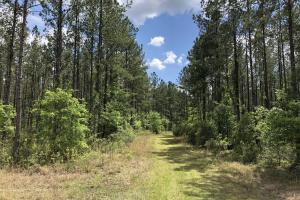 Gillison Branch Hunting / Farming / Timber Land - Jasper County SC