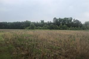 Lee County Hunting and Farming Land - Lee County SC
