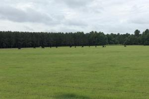 Turn-Key Cattle Ranch With Timber - Grenada County MS