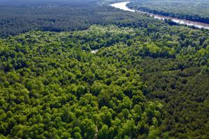 Uriah Riverfront Hunting & Timber Investment in Monroe, AL (12 of 61)