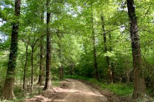 Uriah Riverfront Hunting & Timber Investment in Monroe, AL (9 of 61)