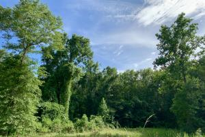 Uriah Riverfront Hunting & Timber Investment in Monroe, AL (45 of 61)