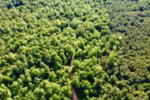 Uriah Riverfront Hunting & Timber Investment in Monroe, AL (59 of 61)