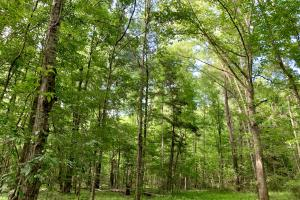 Uriah Riverfront Hunting & Timber Investment in Monroe, AL (7 of 61)
