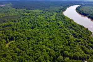 Uriah Riverfront Hunting & Timber Investment in Monroe, AL (6 of 61)