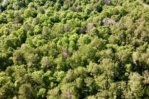 Uriah Riverfront Hunting & Timber Investment in Monroe, AL (18 of 61)