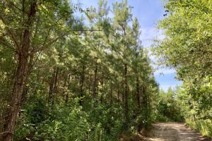 Uriah Riverfront Hunting & Timber Investment in Monroe, AL (23 of 61)