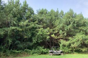 Uriah Riverfront Hunting & Timber Investment in Monroe, AL (28 of 61)