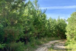 Uriah Riverfront Hunting & Timber Investment in Monroe, AL (42 of 61)