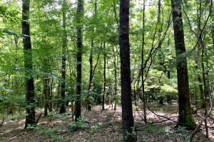 Uriah Riverfront Hunting & Timber Investment in Monroe, AL (11 of 61)