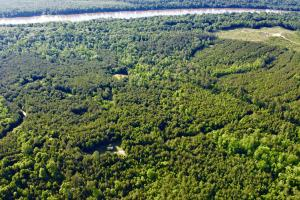 Uriah Riverfront Hunting & Timber Investment in Monroe, AL (10 of 61)