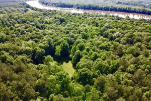 Uriah Riverfront Hunting & Timber Investment in Monroe, AL (22 of 61)