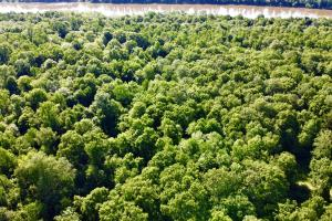 Uriah Riverfront Hunting & Timber Investment in Monroe, AL (49 of 61)